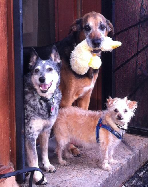 best-three-dog-SPECIES-SPECTRUM